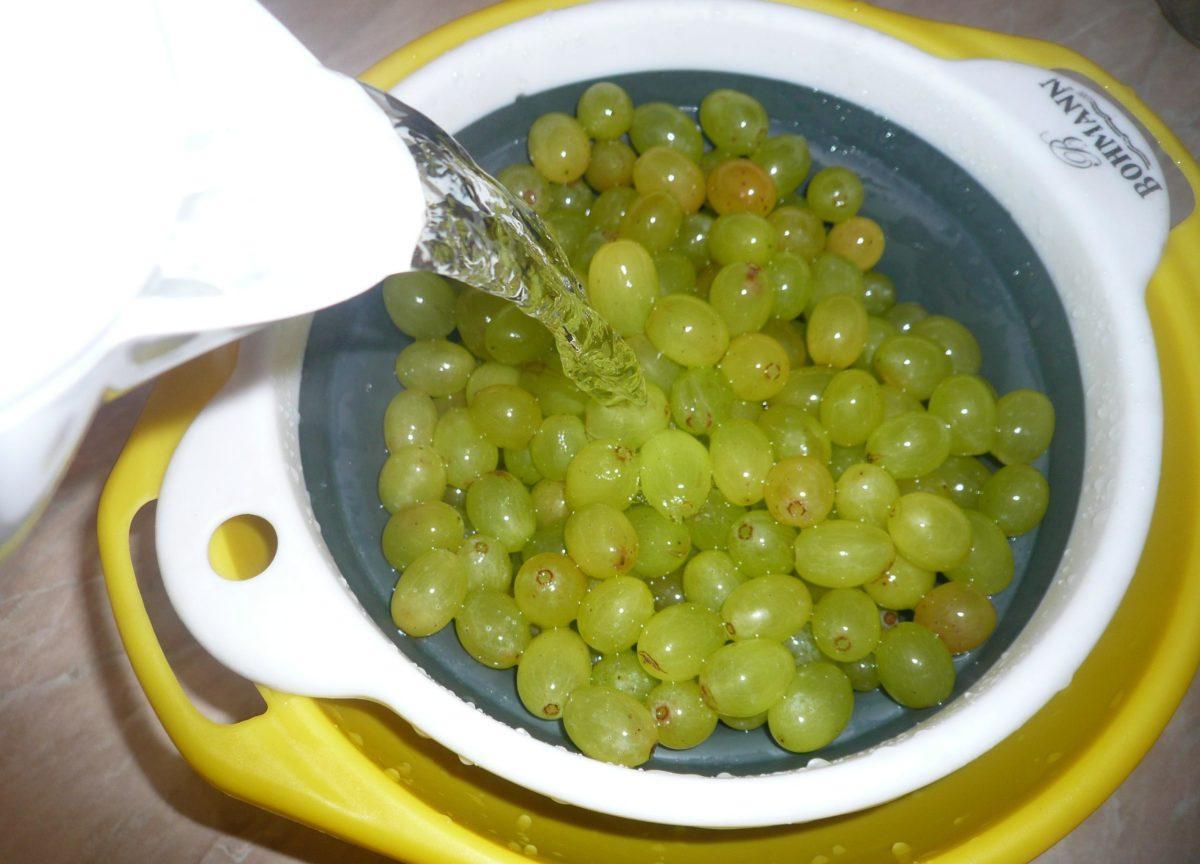 Вино из изабеллы винограда в домашних условиях простой рецепт