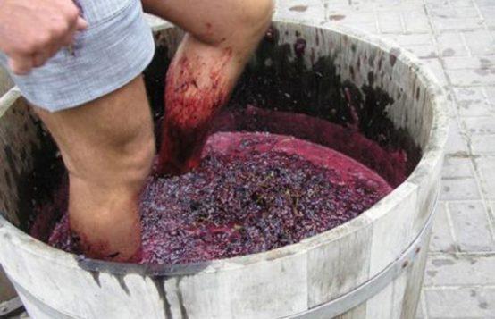 Давление винограда ногами