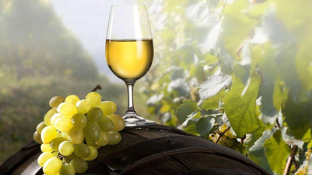 Вкус вина напрямую зависит от используемого сорта винограда. Рассмотрим лучшие сорта для вина