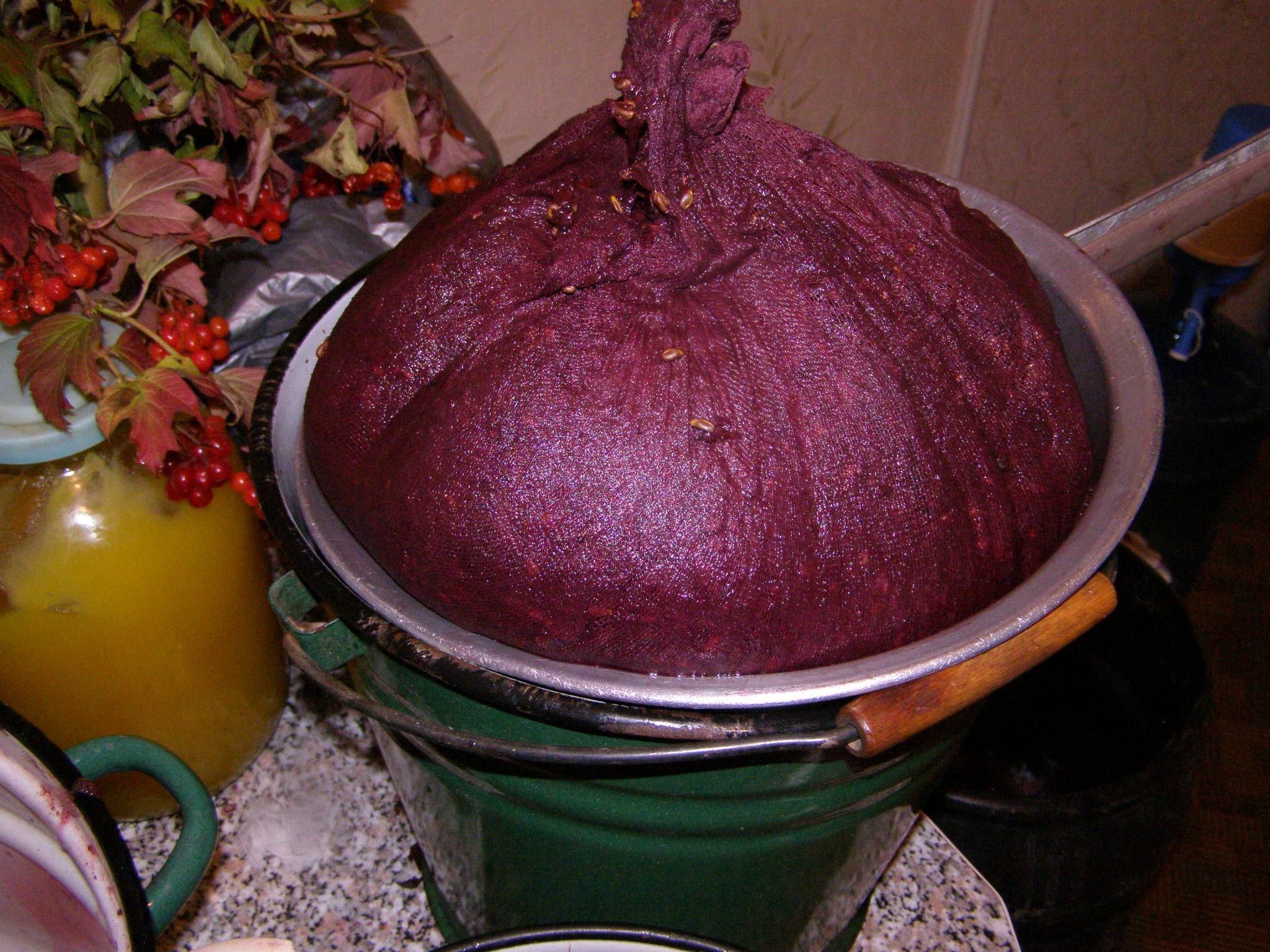 при подготовке ягод и выдавливаю сока следует уделить внимание сортировке ягод.