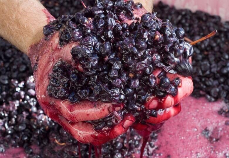 Мезга винограда