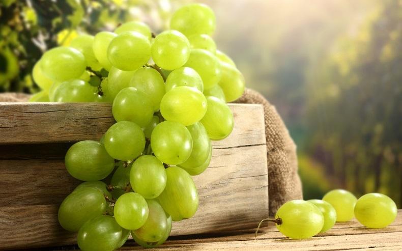 Выбор винограда