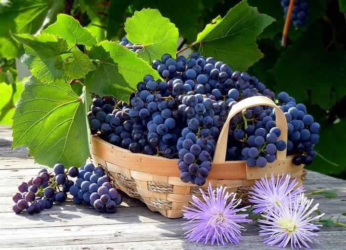 Как приготовить домашнее вино из винограда