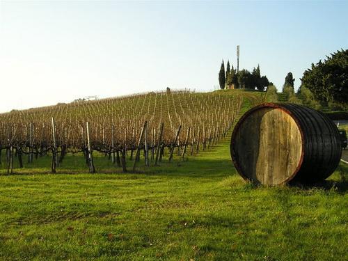 Итальянское виноделие